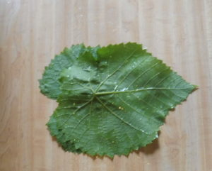 Start of Grape Leaf Rollup